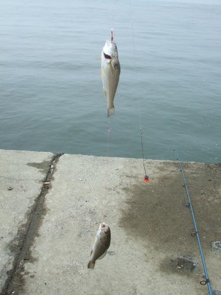 漁港 釣果 飯岡